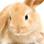 13 Quotes About Rabbits
