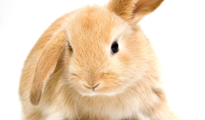 Quotes About Rabbits: 13 Quotes About Rabbits That Are Wonderful Pets