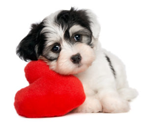 5 Ways To Know That Your Dog Loves You
