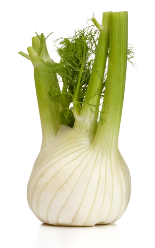 Overall Health Benefits Of Dogs Eating Fennel?