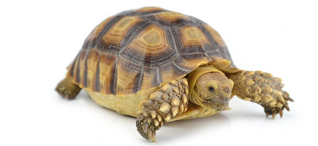 What Natural Foods Do Turtles Eat