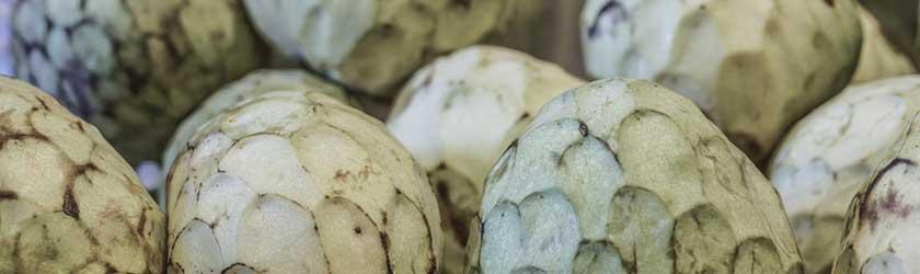 Can Guinea Pigs Eat Cherimoya?