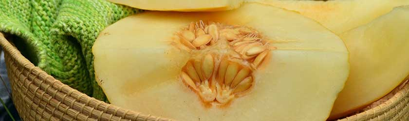 Can Bearded Dragons Eat Muskmelon?