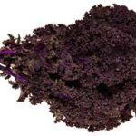 Can Bearded Dragons Eat Purple Kale?