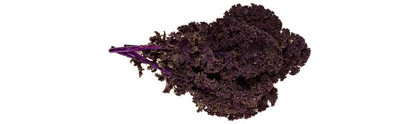Can Bearded Dragons Eat Purple Kale