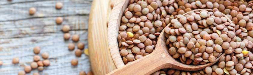 Can Chinchillas Eat Lentils?