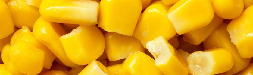 Can Chinchillas Eat Sweetcorn?