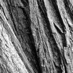 Can Chinchillas Eat Tree Bark?