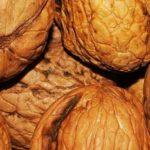 Can Chinchillas Eat Walnuts?