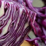 Can Gerbils Eat Red Cabbage?