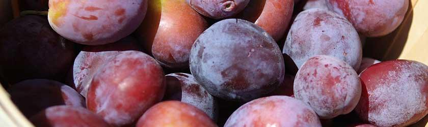 Can Guinea Pigs Drink Prune Juice?
