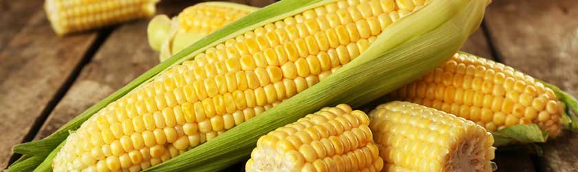 Can Rabbits Eat Corn on the Cob?
