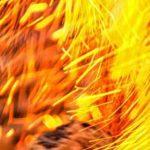 Can Bearded Dragons Eat Fireflies?