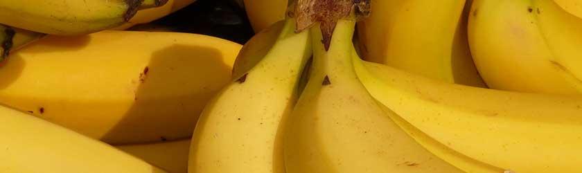 Can Guinea Pigs Eat Bananas?