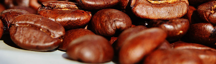 Can Rabbits Eat Coffee Beans?