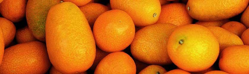 Can Rabbits Eat Kumquats?