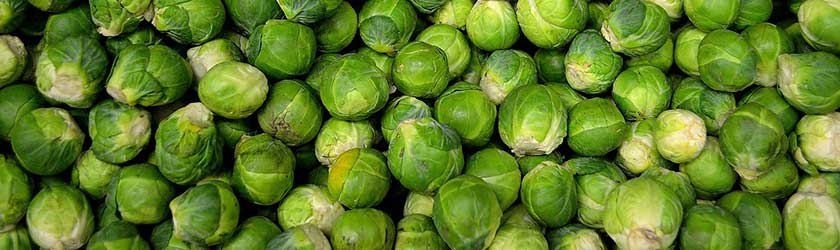 Sprouts Dog Food
