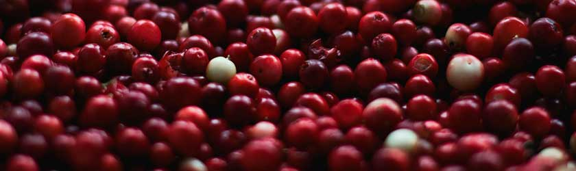 Can Rabbits Eat Cranberries?