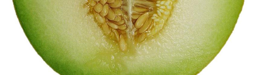 Can Rabbits Eat Honeydew Melon