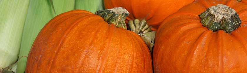 Can Gerbils Eat Pumpkin?