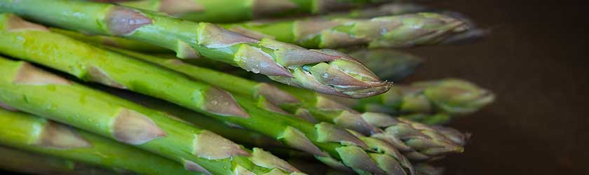 Can Rabbits Eat Asparagus?