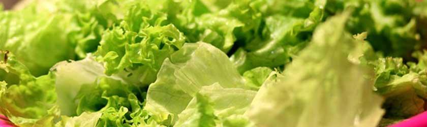 Can Chinchillas Eat Lettuce?