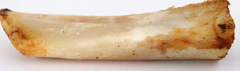 Can Ferrets Eat Bones?