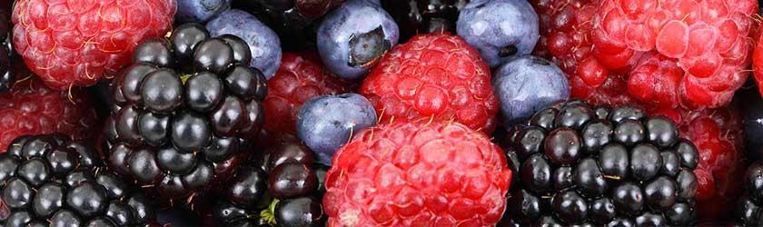 Can Hamsters Eat Berries