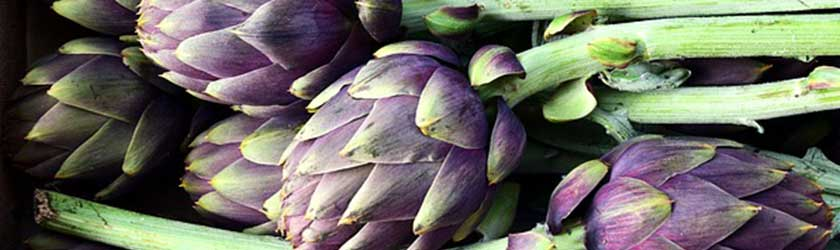 Can Dogs Eat Artichoke?