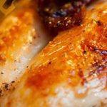 Can Gerbils Eat Turkey