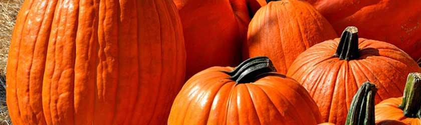 Can Chickens Eat Pumpkins