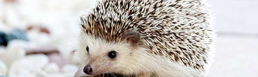Best Cute Hedgehog Names In 2018