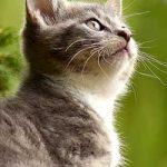 Can Cats Eat Haggis